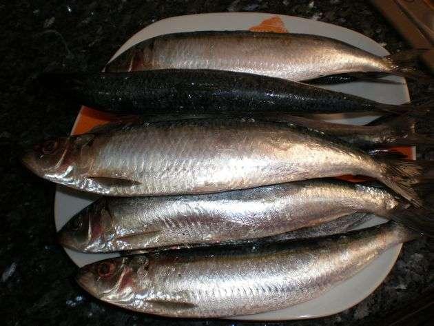 5x0q - Sardinas en sudor de sal marina